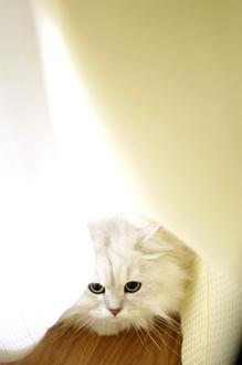 _sun5869